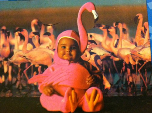"Vista 100 Piece Puzzle - Tom Arma ""Baby with Pink Flamingo"""