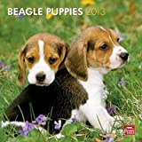 (12x12) Beagle Puppies - 2013 Wall Calendar Reviews