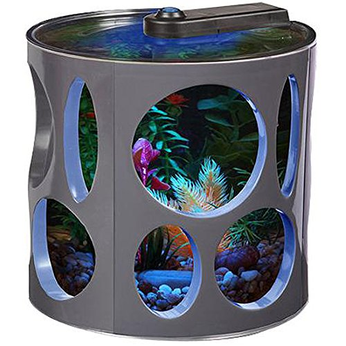Unusual small fish tanks for Unique betta fish tanks