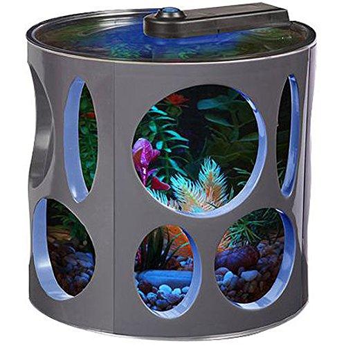 Unusual small fish tanks for Small betta fish tank