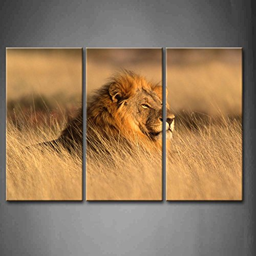 3 Panel Wall Art Big Male African Lion Lying In The Grass Painting Pictures Print On Canvas Animal The Picture For Home Modern Decoration Piece (Stretched By Wooden Frame,Ready To Hang)