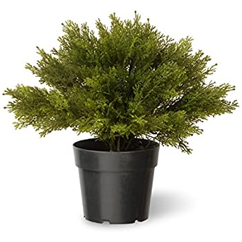National Tree 15 Inch Globe Juniper in Green Pot (LCB4-15-1)