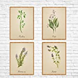 Set of 4 Old Paper look Watercolor Herb Prints Parsley Sage Rosemary and Thyme Unframed Kitchen Art