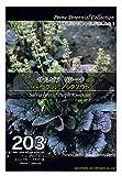 【種子】サルビア リラータ パープル ノックアウト Prime Perennial Collection Life with Green