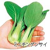 世界の野菜「たべっきりミニ野菜苗 3種 Aセット」 (4連結×3種) / サンファーム