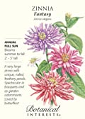 Zinnia Cactus Flower Giant Fantasy Seeds 100 Seeds
