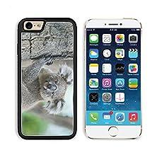 buy Msd Apple Iphone 6 6S Aluminum Plate Bumper Snap Case Australian Koala Sit On Tree Sydney Nsw Australia Exotic Iconic Aussie Mammal Animal With Infant In Lush Jungle Rainforest 35303003