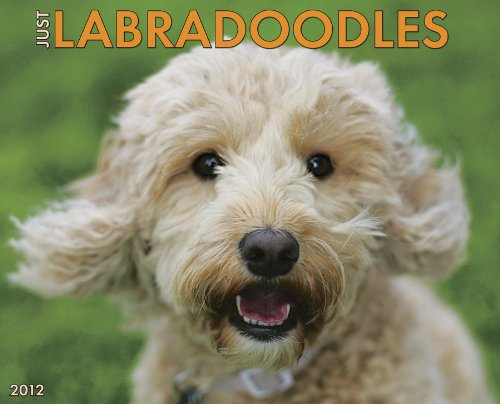 Labradoodles 2012 Calendar (Just (Willow Creek))