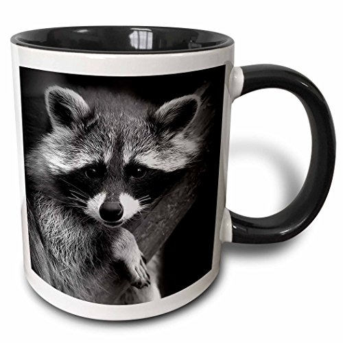 3dRose Baby Raccoon black and white digital image. - Two Tone Black Mug, 11oz (mug_173001_4), 11 oz, Black/White