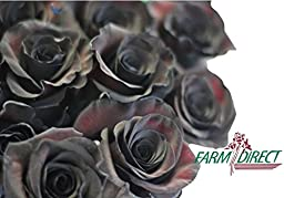 100 Real Fresh Black Roses | Exotic and amazing