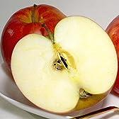 青森県 藤崎町 マル組りんご園のジョナゴールド  5kg  中玉18~20個入り