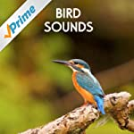 Gentle Birds and Forest Stream for Re...