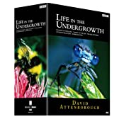 BBC ライフ・イン・ザ・アンダーグロウス/昆虫の世界 DVD-BOX