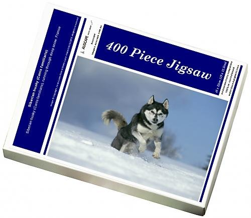 photo-jigsaw-puzzle-of-siberian-husky-canis-familiaris