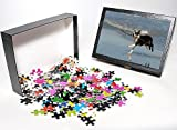 Photo Jigsaw Puzzle of Dog - Boston Terr...