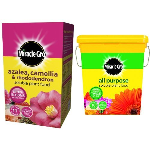 scotts-miracle-gro-azalea-camellia-and-rhododendron-soluble-plant-food-carton-1-kg-scotts-miracle-gr