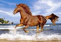 Pferd am Strand - 500 Teile Puzzle von Castorland