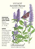 Lavender Hyssop Heirloom Seeds 125 Seeds