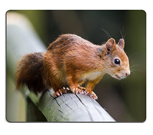 liili-mouse-pad-natural-rubber-mousepad-british-red-squirrel-sitting-on-a-hand-rail-image-id-2169245