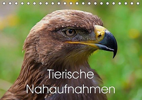 Tierische Nahaufnahmen (Tischkalender 2017 DIN A5 quer): Verschiedene Tierarten in beeindruckenden Nahaufnahmen (Geburtstagskalender, 14 Seiten ) (CALVENDO Tiere)