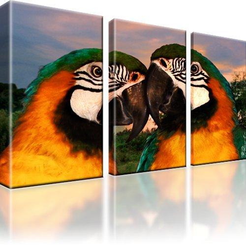 Bilder Papageien Vögel Bild auf Leinwand 3-Teilig: 135×80 cm