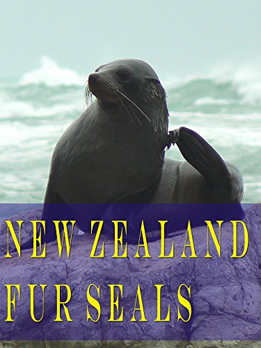 New Zealand Fur Seals on Amazon Prime Instant Video UK