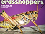 img - for Grasshoppers [Scholastic] (Bugs, Bugs, Bugs!) book / textbook / text book