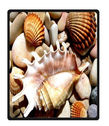 Seashell Throw Blanket front-1034568