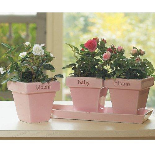 Bloom Baby Flower Garden Pink Ceramic Decor Plant Pots front-434049