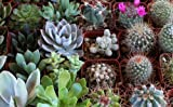 Awesome Collection of TWENTY (20) Unique Cactus and Succulents No Two Alike