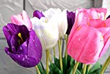 RARE & REAL TOUCH Fleurs Artificielles Dew Lot de 6 tiges de tulipes-Blanc/Violet