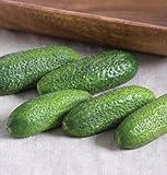 Gherkin Cucumber Adam D2563A (Green) 10 Organic Seeds by David's Garden Seeds