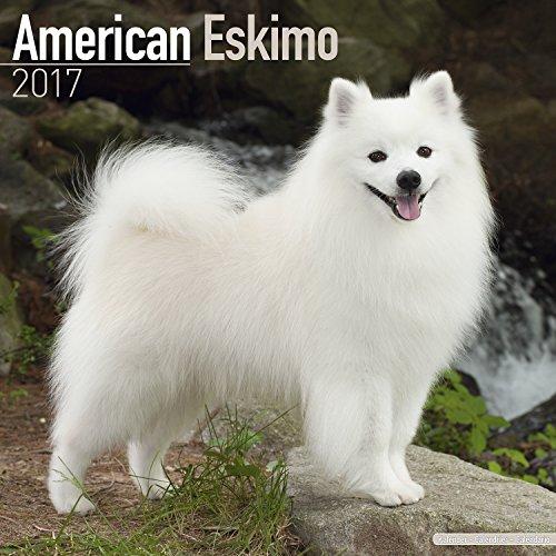 American Eskimo Dog Calendar 2017 - Dog Breed Calendars - 2016 - 2017 wall calendars - 16 Month by Avonside