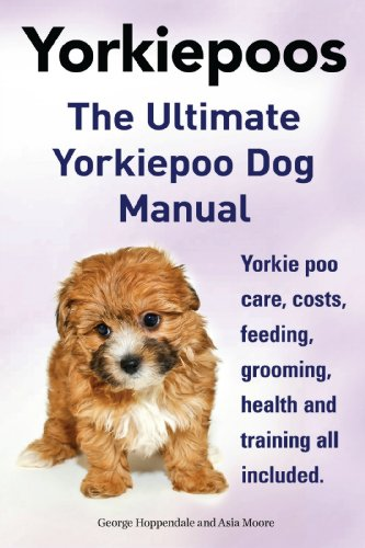 general information on yorkie poos dog breeds picture