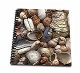 Sea Shells Sea Shells Memory Book 12 X 12 Inch (Db 4381 2)