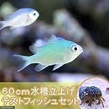 (海水魚 無脊椎)60cm水槽立上げテストフィッシュセット(1セット) 本州・四国限定[生体]