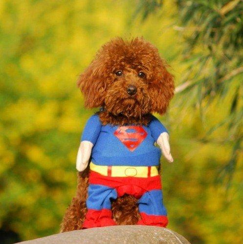 小型犬の服・スーパーマン・コスプレ衣装 (S)