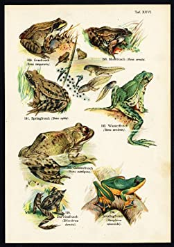 Fishes, Reptiles and Amphibians by Dr. Aug. Schleyer; Berlin, 1890