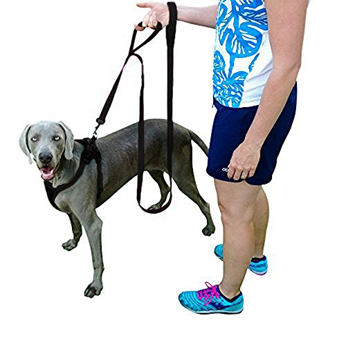 How To Buy A Dog Training Collar