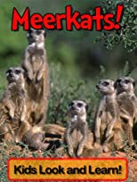 Meerkats! Learn About Meerkats and Enjoy Colorful Pictures - Look and Learn! (50+ Photos of Meerkats)