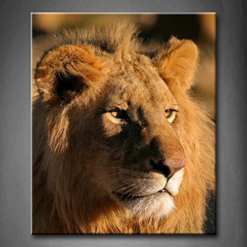 Portrait Of A Big Male Lion Panthera Leo Kalahari South Africa Wall Art Painting The Picture Print On Canvas Animal Pictures For Home Decor Decoration Gift (Stretched By Wooden Frame,Ready To Hang)