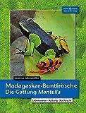 Madagaskar-Buntfrösche