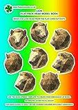 Lion: Flat-pack Head Model Book