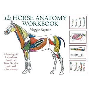 Amazon.com: The Horse Anatomy Workbook (9780851319056): Maggie ...