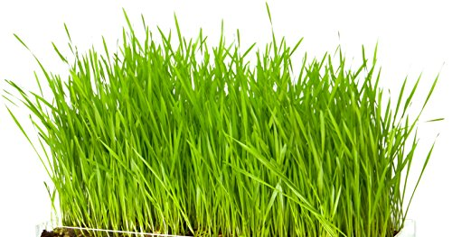 new-microgreen-organic-wheatgrass-3-pack-refill-pre-measured-soil-seed-use-with-window-garden-multi-