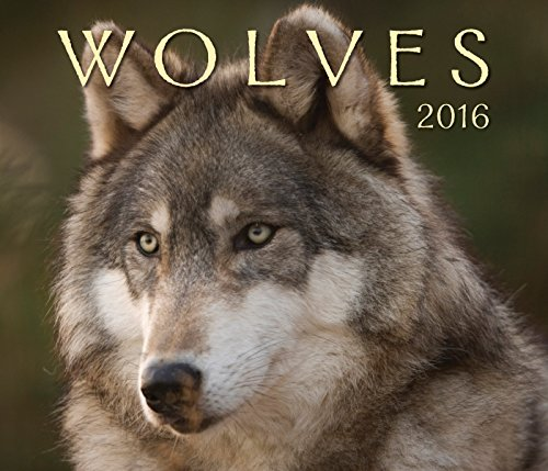Wolves 2016