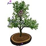 Thefancymart Artificial Bonsai Green Hackle Berry Plant (size 12 Inchs/30 Cms) In Natural Wood - 1243