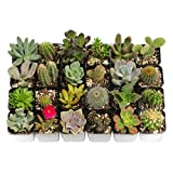 Shop Succulents Cactus and Succulent (Collection of 20)