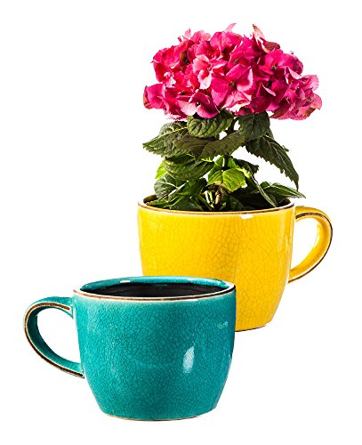 Large Tea Cup Planters Set Of 2