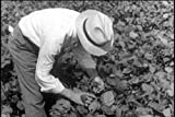 Classic Soy Bean Film DVD: 1952 Film About The History Of Soy Beans Production, Soy Products, & Soy Manufacturing
